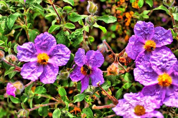 Endemik Bitki