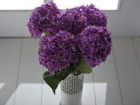 Mor ofis çiçeği