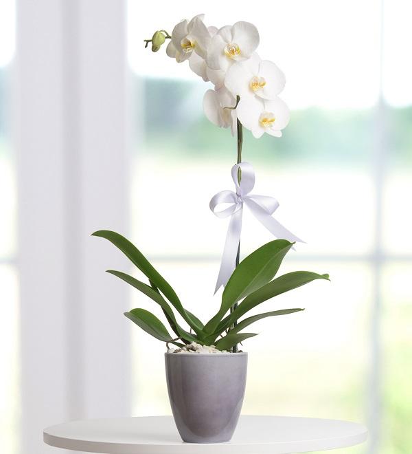 orkide01